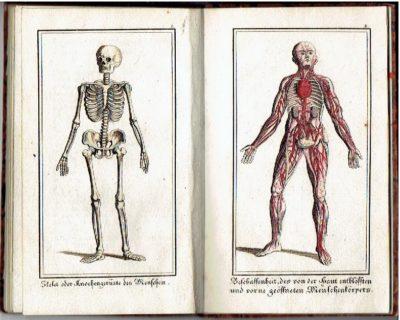 Anschaulich gemachte Natur- und Körperlehre nebst einigen wichtigen Gesundheits-Regeln. Ein unterhaltendes Lese- und fassliches Unterrichts-Büchlein für die Jugend GRUBER, Ferdinand Joseph